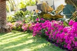 Landscape Designer Folsom, CA Backyard Renovation